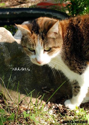 金魚 + 猫_b0253205_15124583.jpg