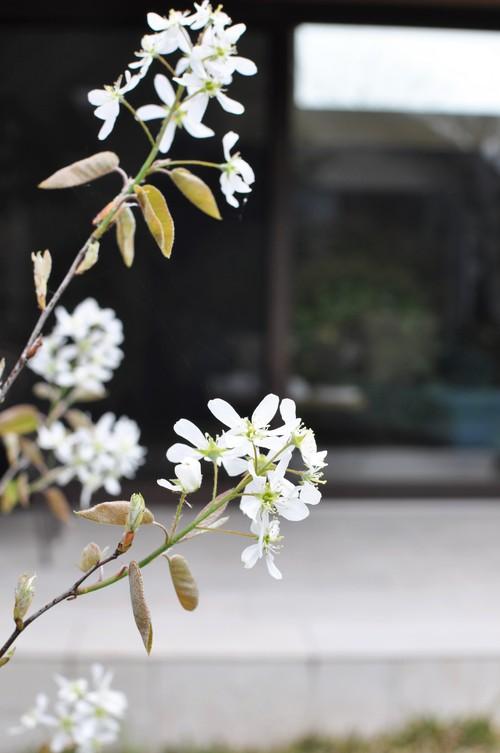 お庭創り_f0150413_11471135.jpg