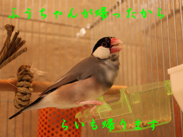 c0365734_20203053.jpg