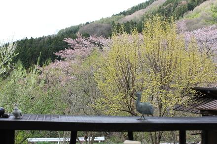 芽吹きの春_d0249047_10485897.jpg