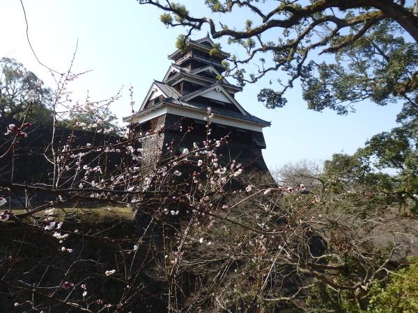 熊本城の勇姿(熊本がんばれ)_f0337554_08311083.jpg
