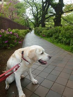 with dog  新緑と花と笑顔に癒されて_a0165160_07381706.jpg