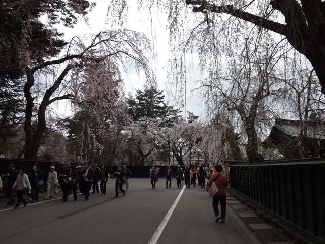 秋田県角館の桜_f0019498_20381676.jpg