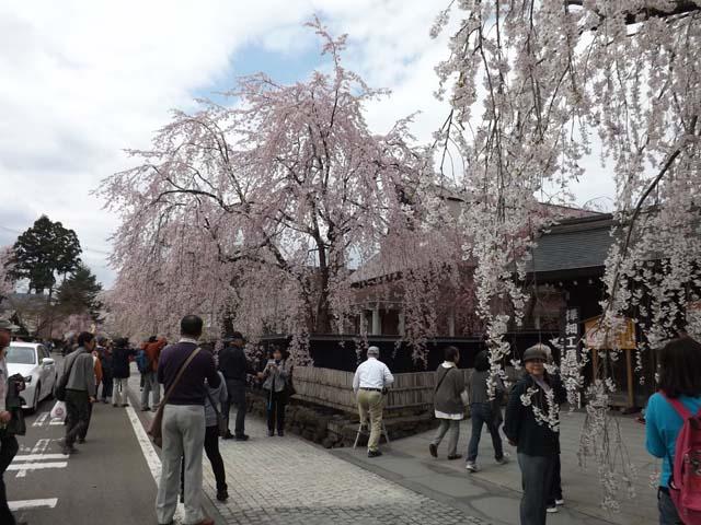 秋田県角館の桜_f0019498_20384860.jpg