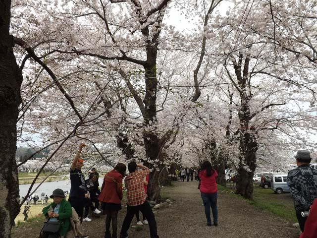 秋田県角館の桜_f0019498_20391532.jpg