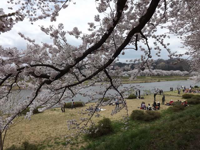 秋田県角館の桜_f0019498_20393382.jpg