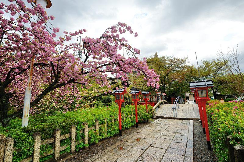 京の桜巡り2016@六孫王神社 八重桜_f0032011_18315616.jpg