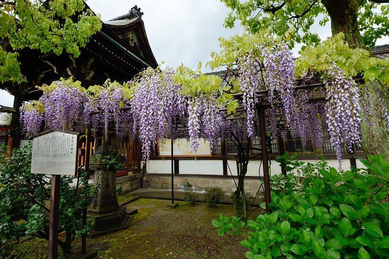 京の桜巡り2016@六孫王神社 八重桜_f0032011_18344394.jpg