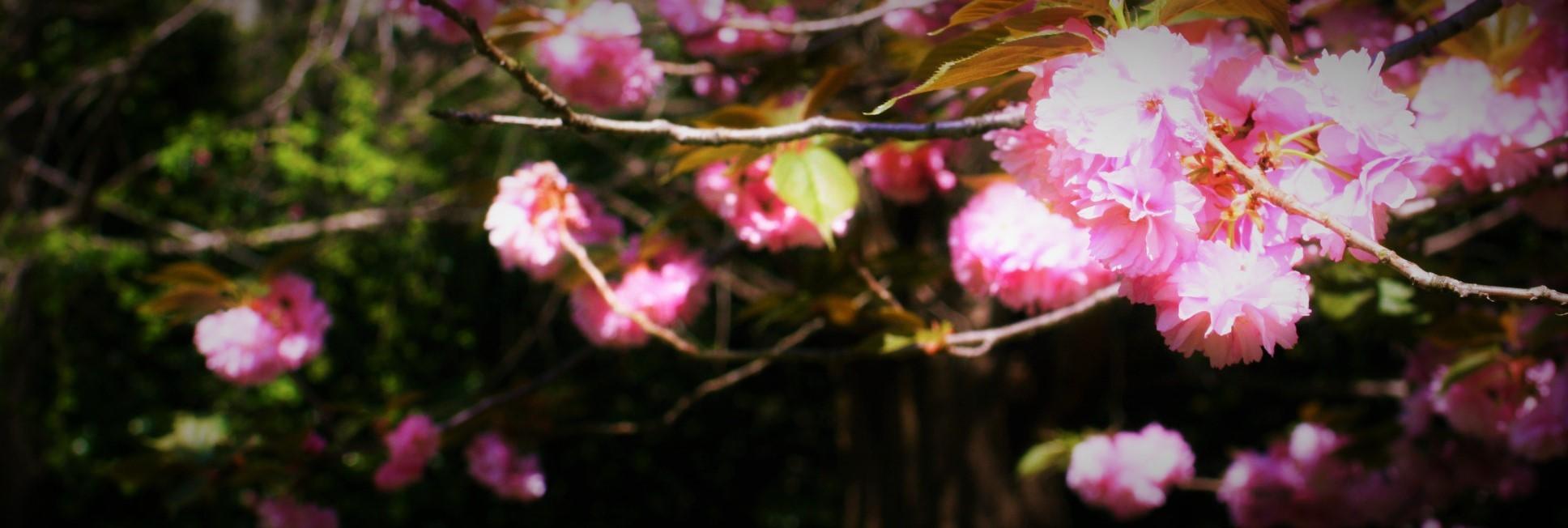 f0195711_18135901.jpg