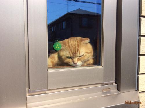 窓際の猫_d0344913_00212767.jpg