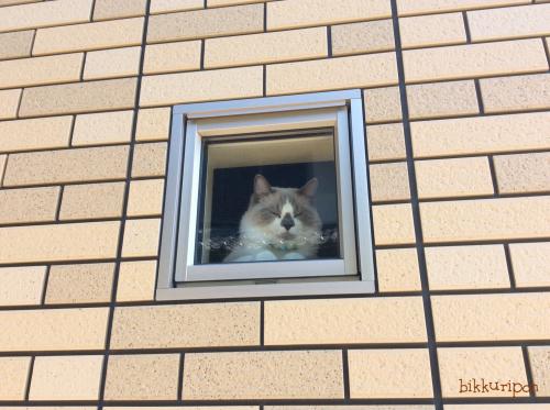 窓際の猫_d0344913_00213672.jpg