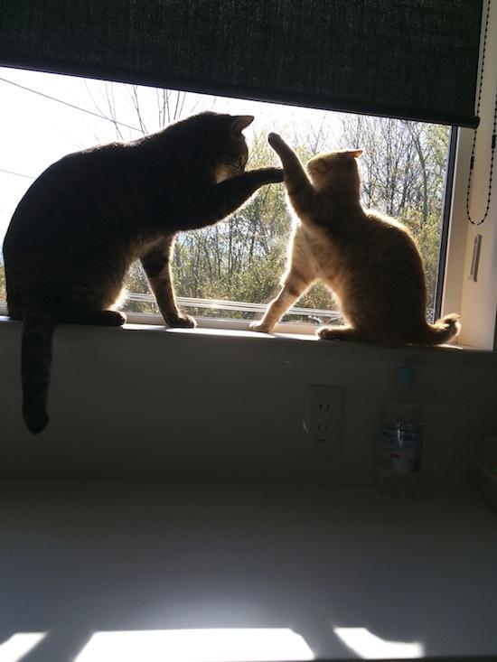 仔猫のこと②_a0006822_2310227.jpg