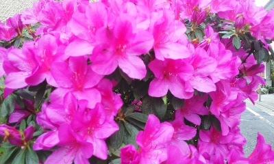 d0079830_9515436.jpg