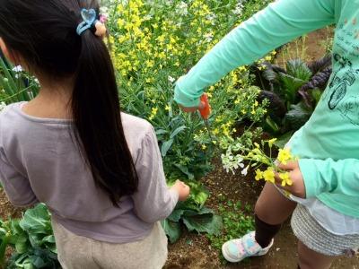 MARK IS 屋上庭園で花摘み_b0307951_23302331.jpg