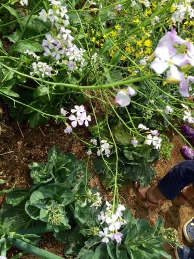 MARK IS 屋上庭園で花摘み_b0307951_23342419.jpg