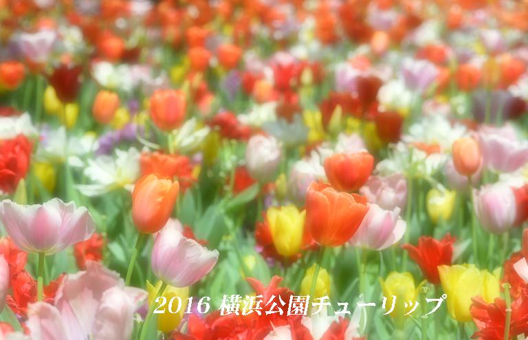 d0251161_09333580.jpg