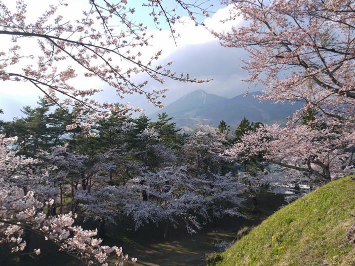 散ってしまっていた三春滝桜、見ごろは1週間前だった4・20_c0014967_9311728.jpg