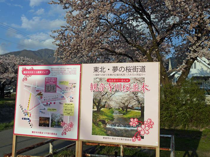 散ってしまっていた三春滝桜、見ごろは1週間前だった4・20_c0014967_9324546.jpg