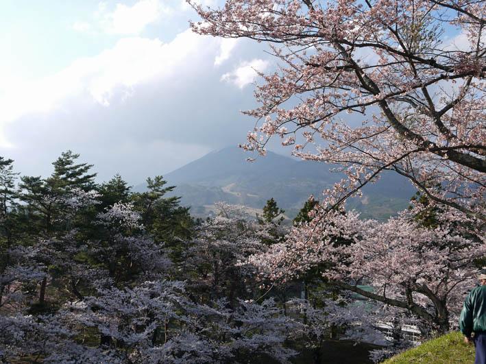 散ってしまっていた三春滝桜、見ごろは1週間前だった4・20_c0014967_932921.jpg