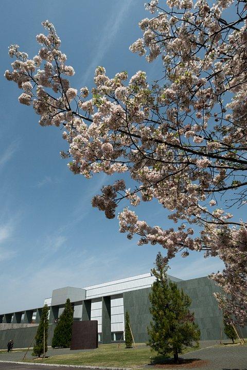 桜の季節の豊田市美術館_d0353489_16183072.jpg