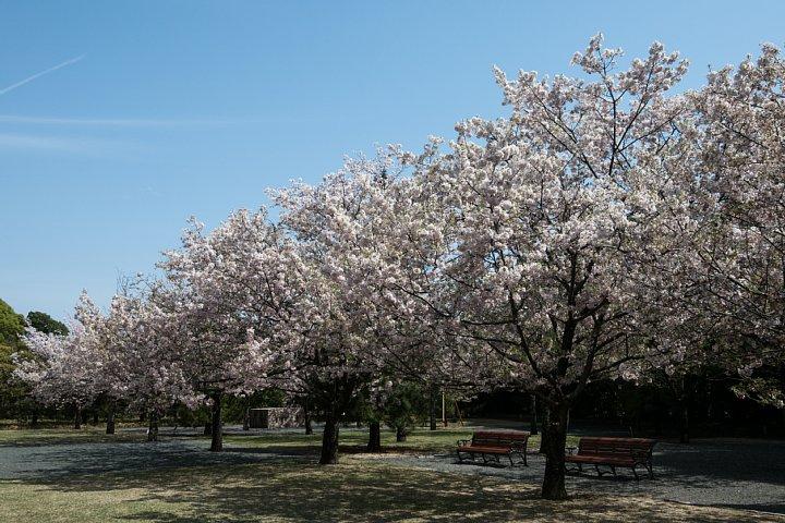 桜の季節の豊田市美術館_d0353489_16254388.jpg