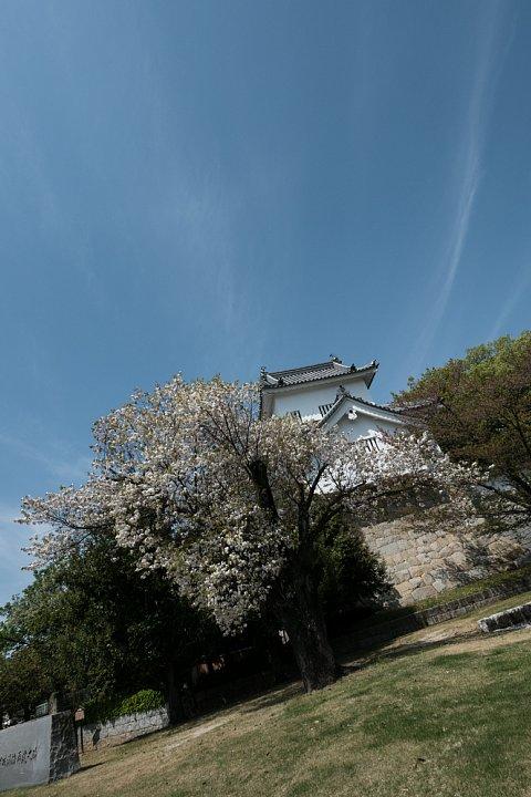 桜の季節の豊田市美術館_d0353489_1626851.jpg