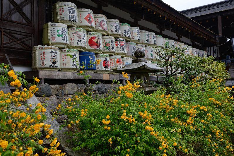 初夏の色!山吹@松尾大社_f0032011_1941412.jpg