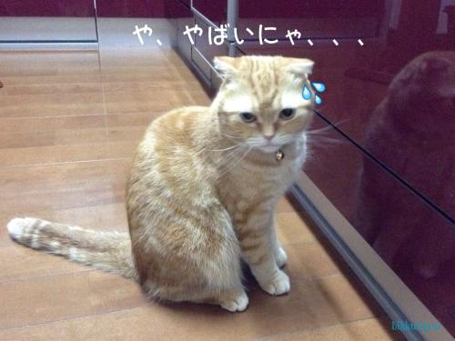 猫用品で失敗_d0344913_13190351.jpg