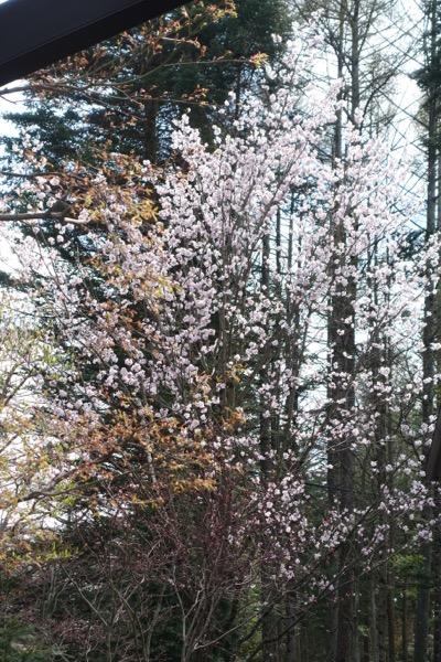 春の陽気に誘われてルンルンしてたら_e0192217_8212993.jpg