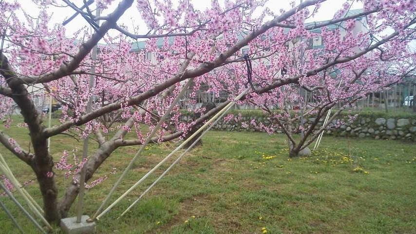 春のお便り  from 一宮_f0325525_00574292.jpg