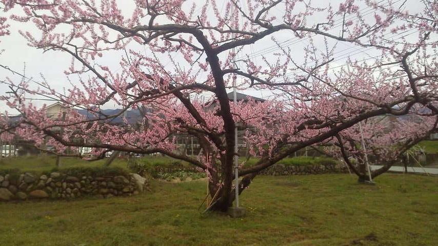春のお便り  from 一宮_f0325525_00575501.jpg