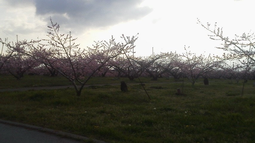 春のお便り  from 一宮_f0325525_01000698.jpg