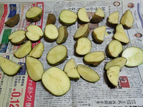 私のまめつぶ自給農園2016 Vol.3じゃが芋を植えました_b0206037_09432923.jpg