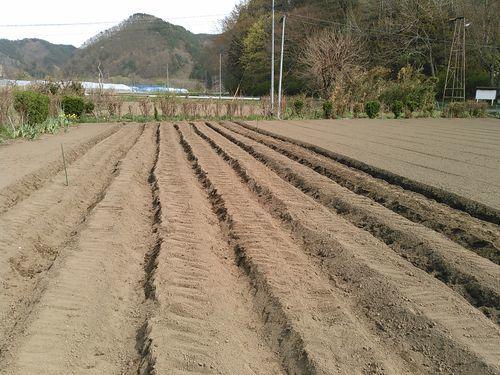 私のまめつぶ自給農園2016 Vol.3じゃが芋を植えました_b0206037_09443132.jpg