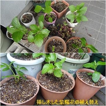 4月の本 & 紫陽花の植え替え_a0084343_12234251.jpg