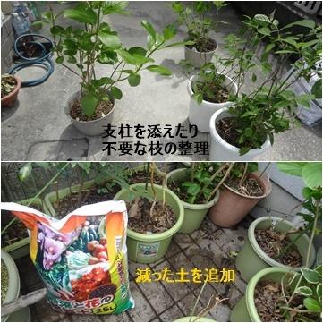 4月の本 & 紫陽花の植え替え_a0084343_12234671.jpg