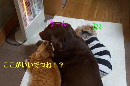 d0013645_20120080.jpg