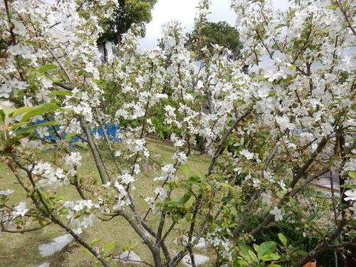 '16,4,24(日)おうちの花壇の花!_f0060461_722261.jpg