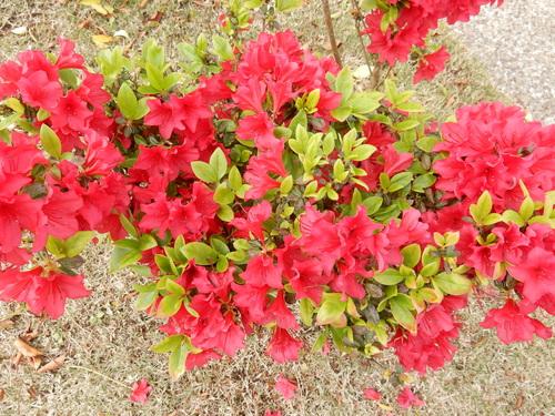 '16,4,24(日)おうちの花壇の花!_f0060461_7284539.jpg