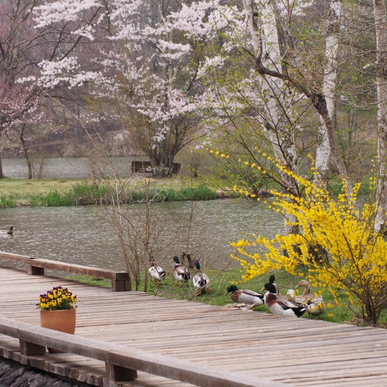 塩沢湖でお花見できちゃいました!_a0104074_2224542.jpg