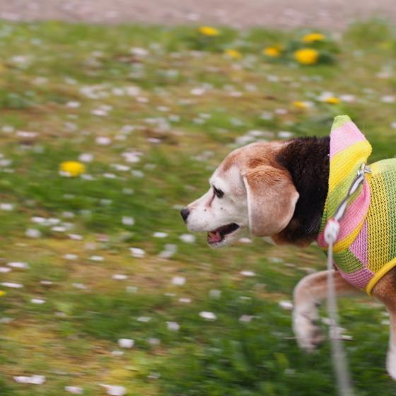 塩沢湖でお花見できちゃいました!_a0104074_2231355.jpg