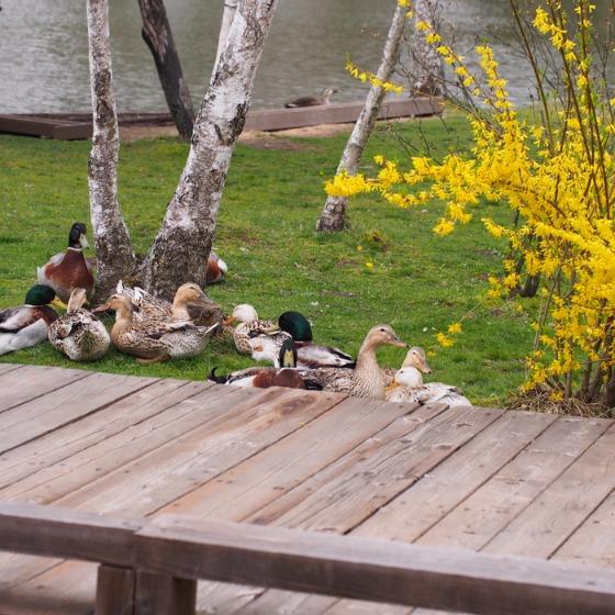 塩沢湖でお花見できちゃいました!_a0104074_22341693.jpg