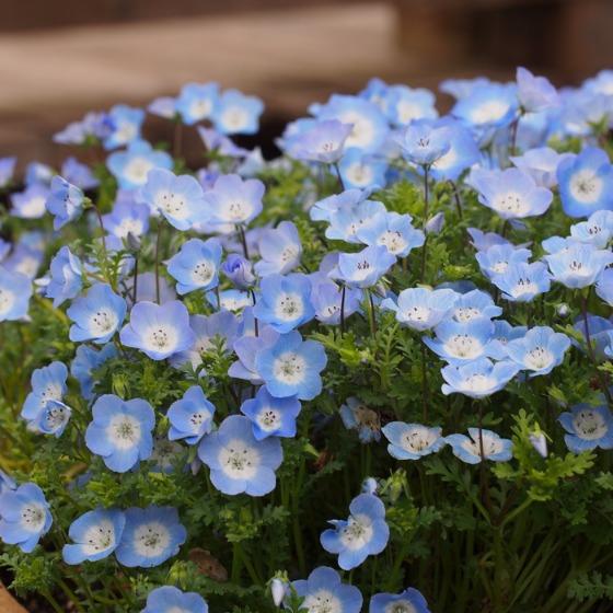 塩沢湖でお花見できちゃいました!_a0104074_22343914.jpg
