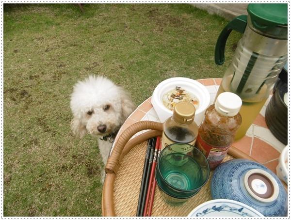 今年初めてのお庭BBQ、2わんずも美味しかったね~_b0175688_21231368.jpg