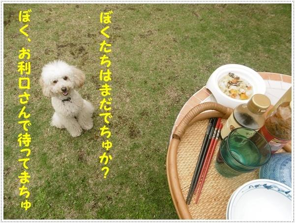 今年初めてのお庭BBQ、2わんずも美味しかったね~_b0175688_21231757.jpg