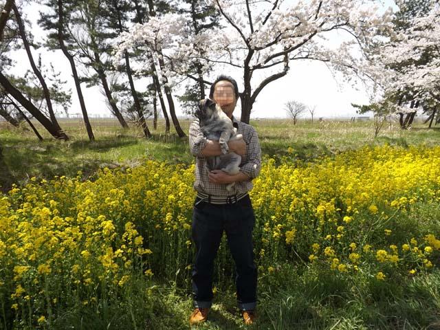秋田県大潟村菜の花ロード_f0019498_1762311.jpg