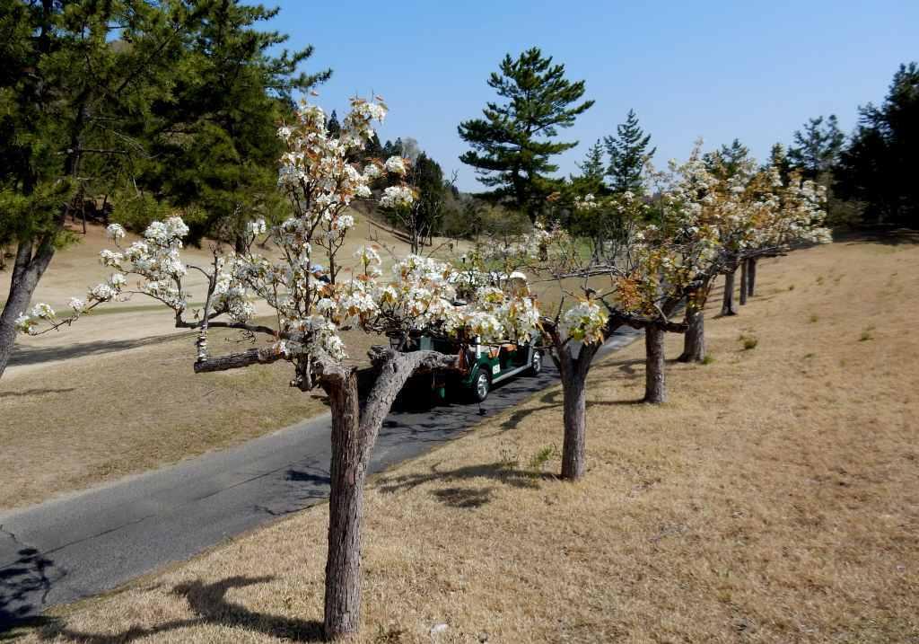 梨の花を眺めながら、鶯の声を聞きながら_a0148206_21294808.jpg