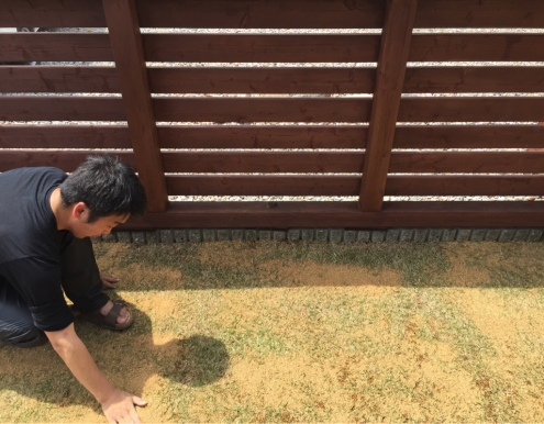 芝生の手入れ_e0149215_12013952.jpg