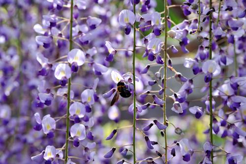 四月下旬になると、いつも思いを寄せる「花」がある。_b0169522_21262985.jpg