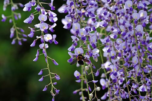 四月下旬になると、いつも思いを寄せる「花」がある。_b0169522_21264044.jpg